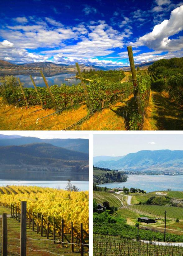 Kettle-Valley-Vineyard-(1)