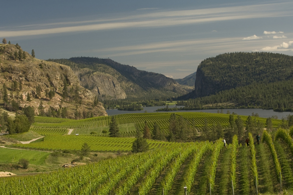 Blue Mountain is located at 2385 Allendale Rd. in Okanagan Falls, BC | 250-497-8244 | bluemountainwinery.com