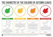 Chemistry-of-the-Colours-of-Autumn-Leaves-v2-1024x724