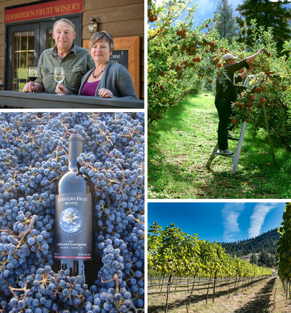 Forbidden Fruit Winery is located at 620 Sumac Rd. in Cawston, BC | 1-855-499-2649 | forbiddenfruitwines.com