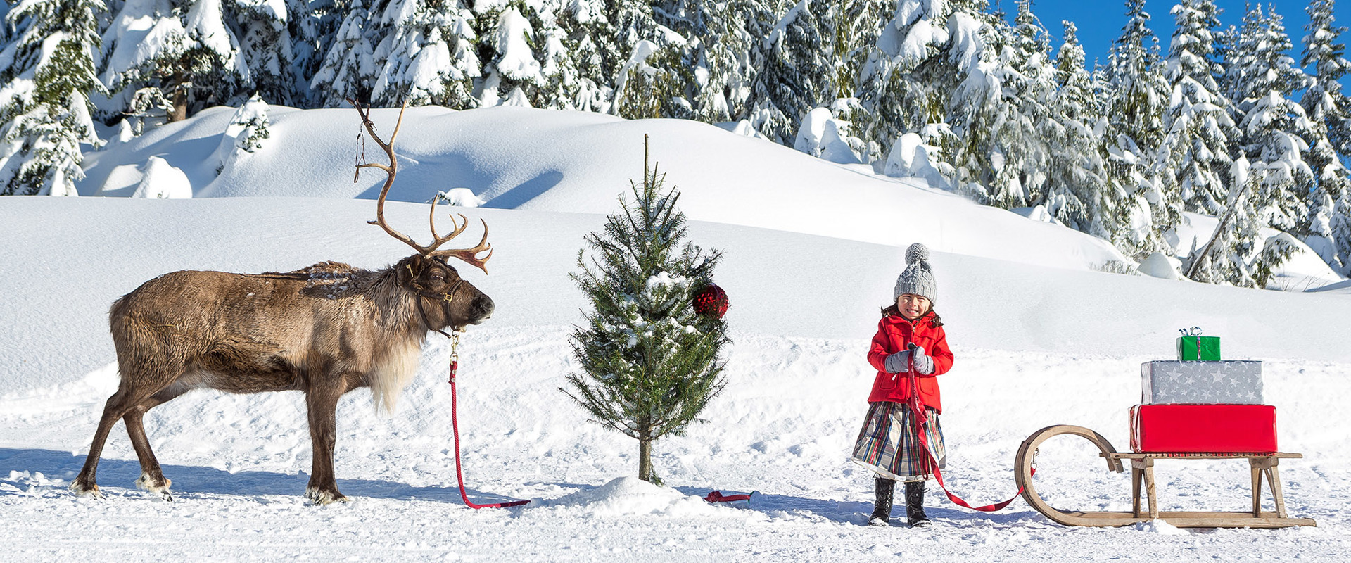 "Holiday Spirit Need Uplifting? Head Up Grouse Mountain for ""Peak of ..."