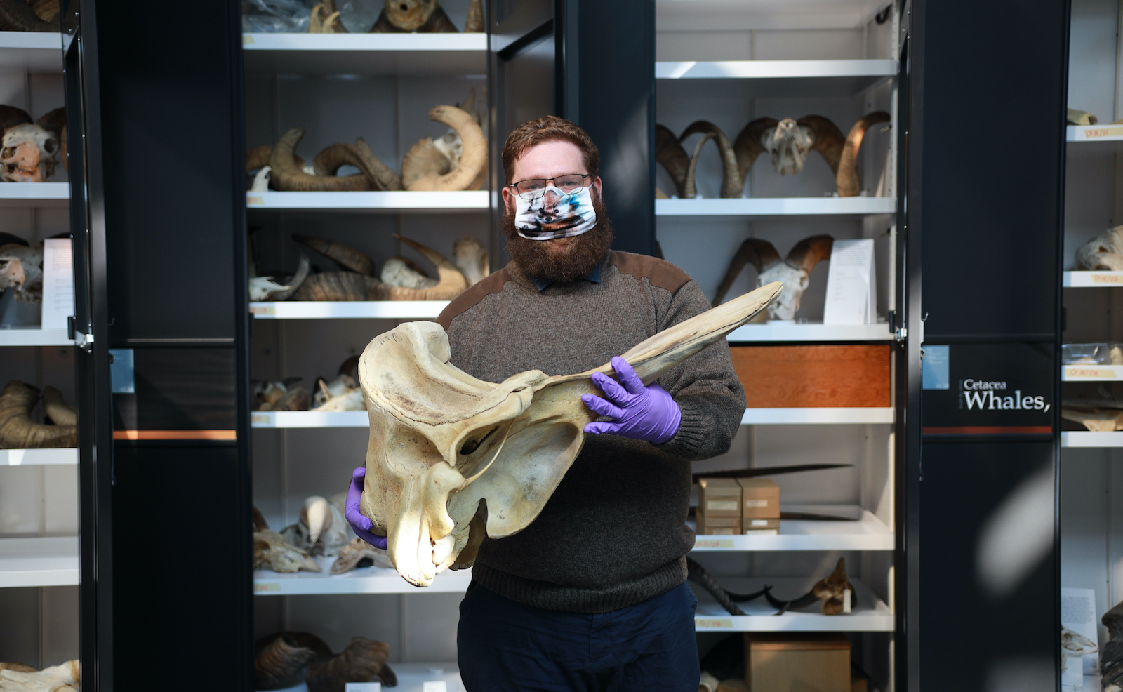 FROM THE COLLECTION // Appreciating the Sculptural Beauty of a Cuvier's Beaked Whale Skull